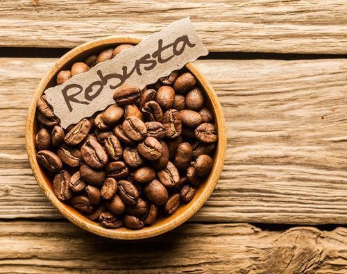 Cà phê Robusta và những điều cần biết