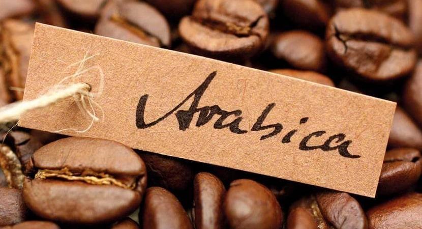 Cà phê Arabica là gì? Thông tin đầy đủ nhất về cà phê Arabica