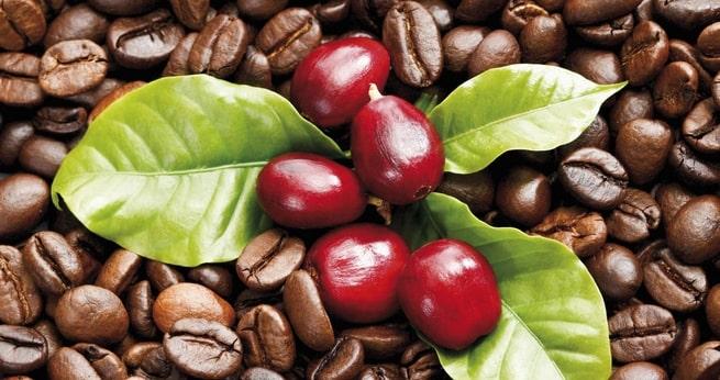 Phân biệt các loại hạt cà phê? Đi tìm hoàng hậu của vương quốc cà phê