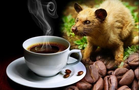 Cà phê chồn là gì? Đồ uống thượng hạng hay chỉ là đồ phế thải